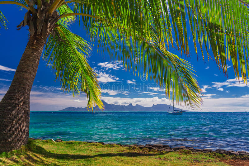 Palma sulla spiaggia sulla Tahiti con la vista dell'isola di Moorea immagine stock libera da diritti