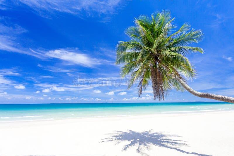 Palma sulla spiaggia tropicale di paradiso con acqua blu ed il cielo blu del turchese fotografia stock libera da diritti