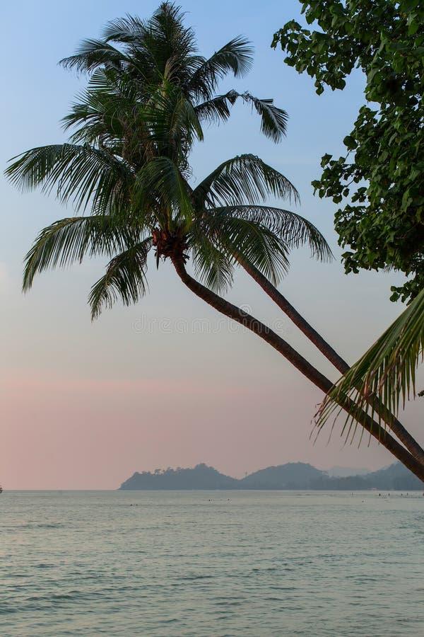Palma sulla spiaggia tropicale dopo il tramonto Corsa fotografie stock libere da diritti