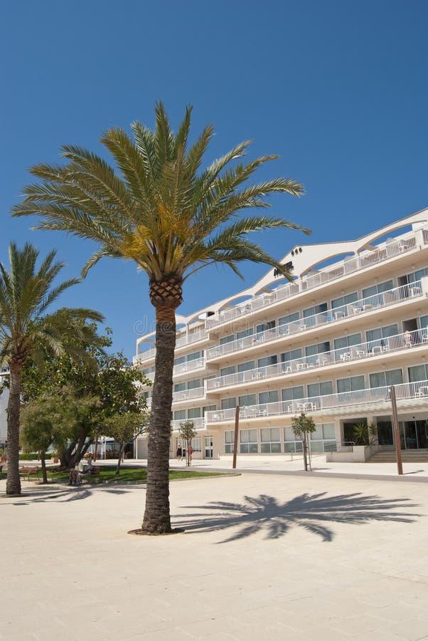 Palma Sunlit delante de un hotel foto de archivo libre de regalías
