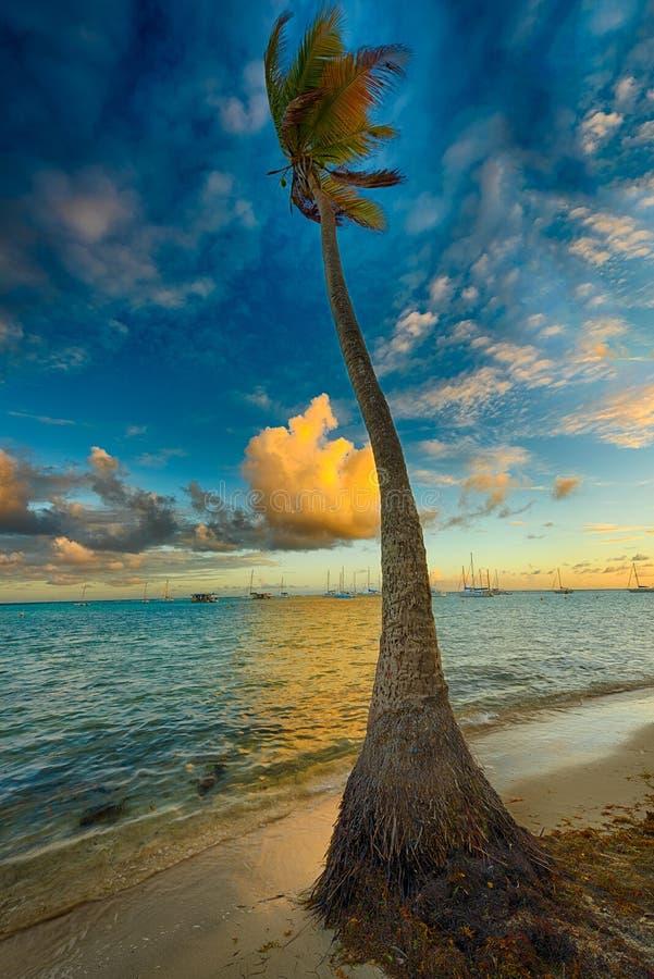 Palma a tempo di tramonto immagine stock