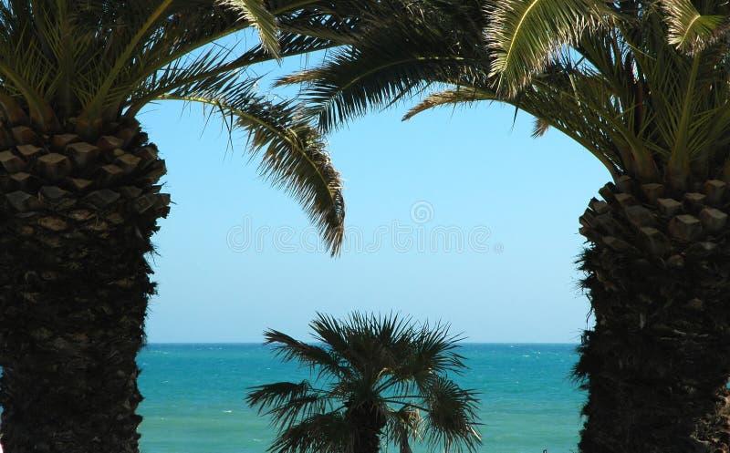 palma trees1 obrazy royalty free
