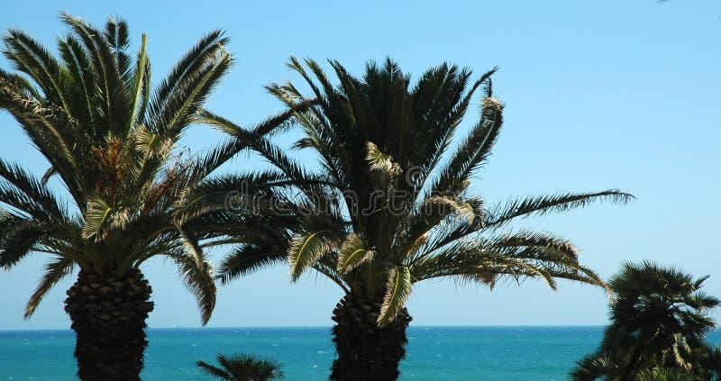 palma trees2 obrazy stock