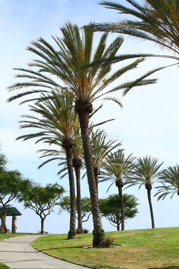 Palma Tress All Around immagini stock libere da diritti