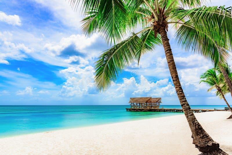 Palma tropical da praia do paraíso o mar das caraíbas fotografia de stock