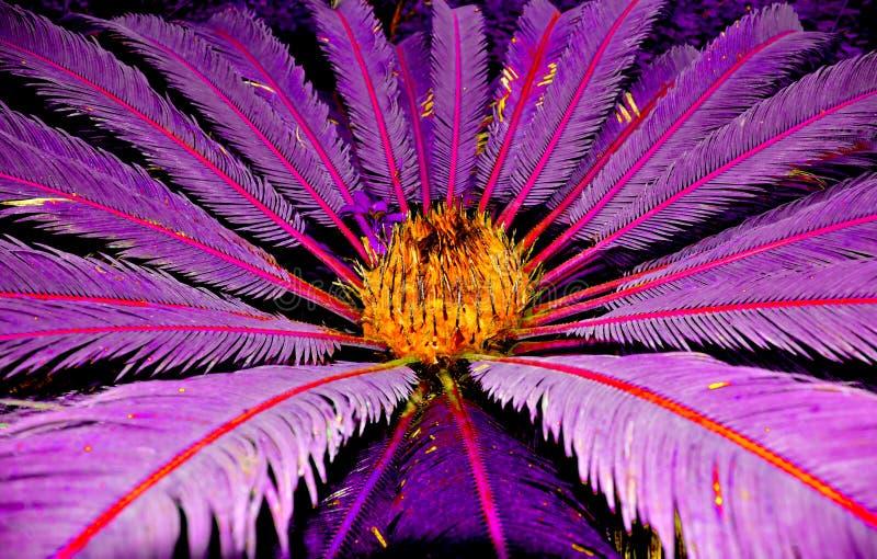 Palma Tropical De La Pesadilla Fotos de archivo libres de regalías