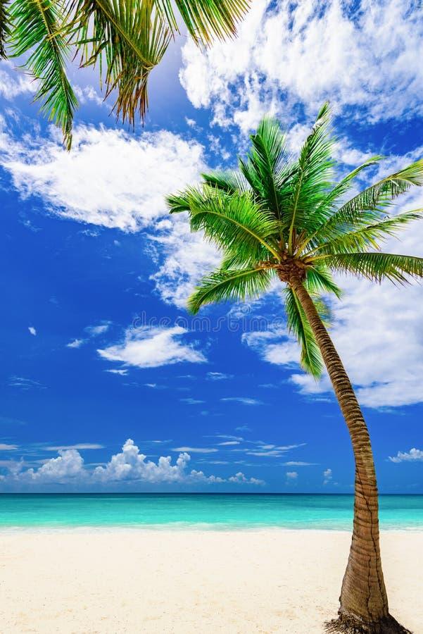 Palma tropical de la playa del paraíso el mar del Caribe foto de archivo libre de regalías