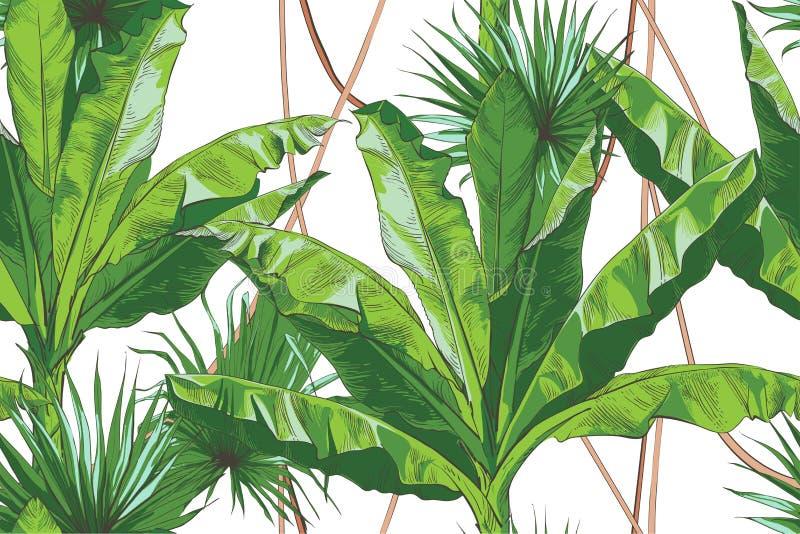 Palma tropical de los plátanos del vector, modelo inconsútil de textura ilustración del vector