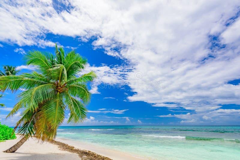 Palma tropicale della spiaggia di paradiso il mar dei Caraibi immagine stock libera da diritti