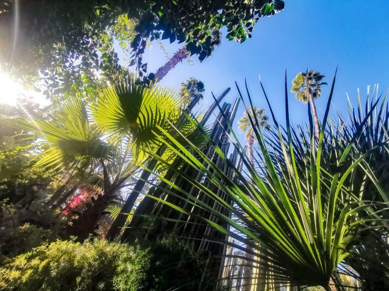 Palma tropicale di Morroco fotografie stock