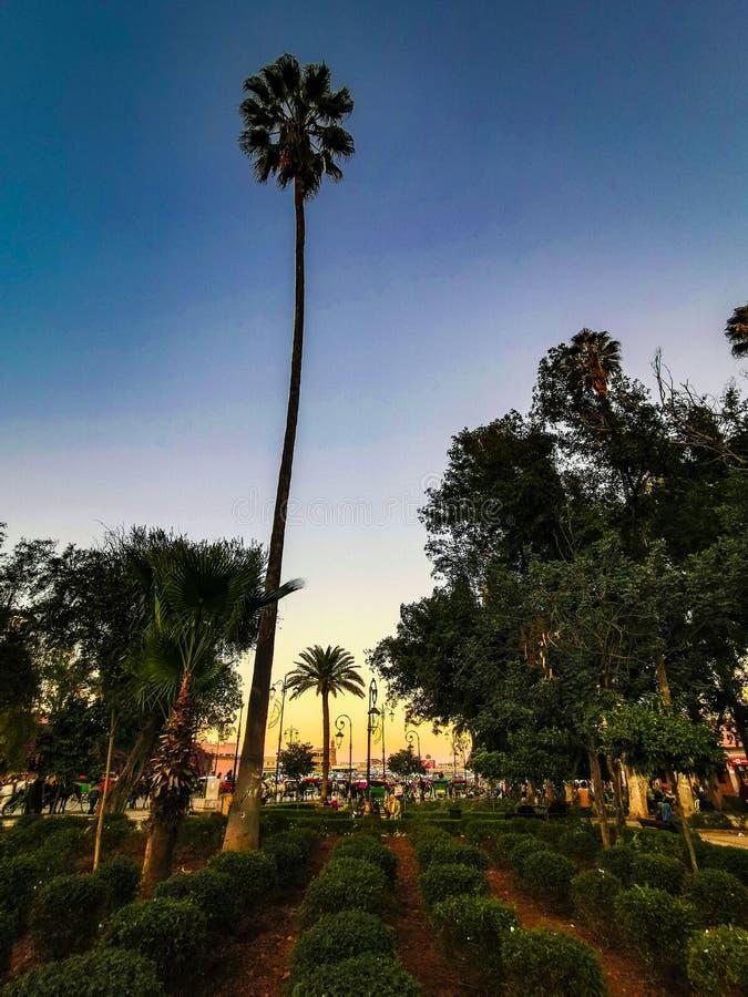 Palma tropicale di Morroco immagini stock libere da diritti