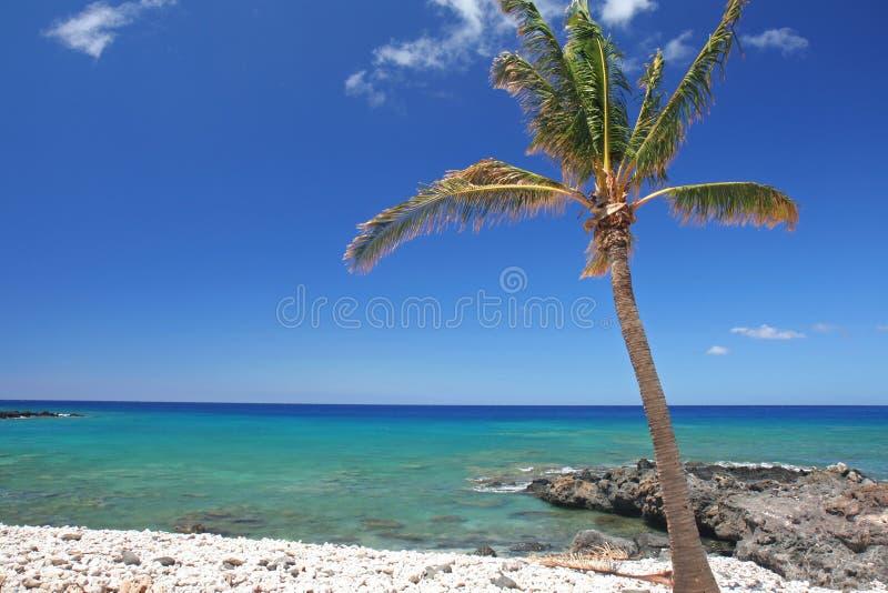 Palma tropicale e della spiaggia immagini stock libere da diritti