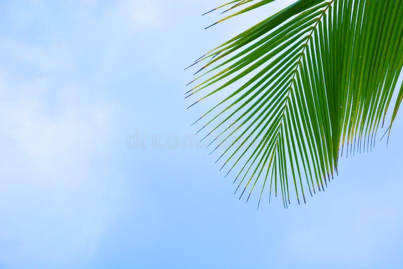 palma tropikalna obraz royalty free