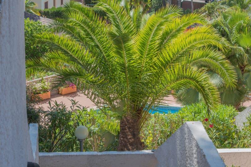 Palma verde bonita foto de stock royalty free