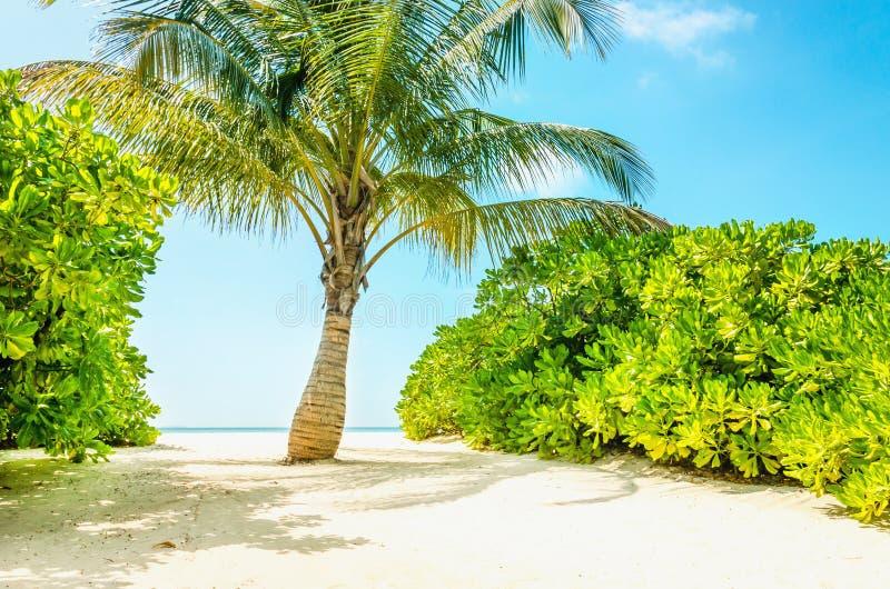 Palma verde esotica su un fondo del cielo azzurrato fotografia stock