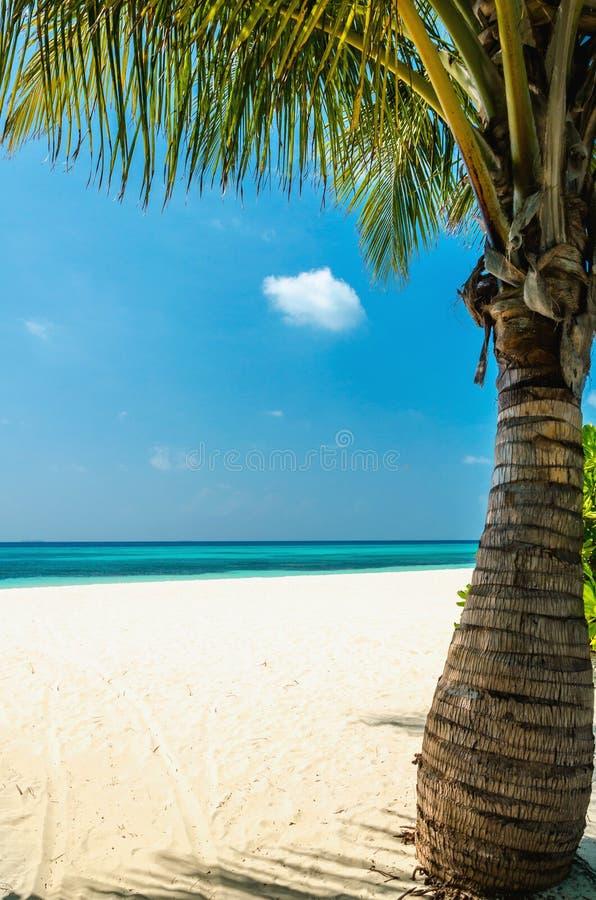Palma verde esotica su un fondo di acqua azzurrata fotografia stock libera da diritti