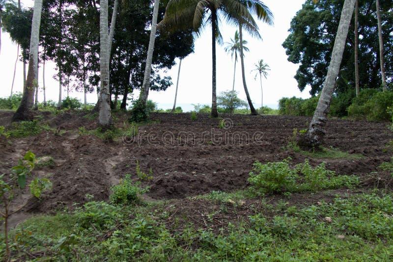 Palma verde a Zanzibar fotografia stock libera da diritti