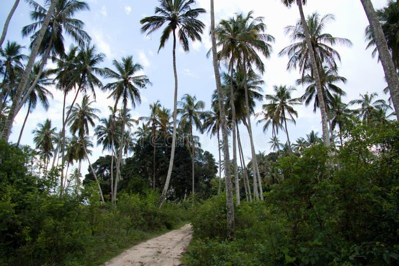 Palma verde a Zanzibar fotografia stock