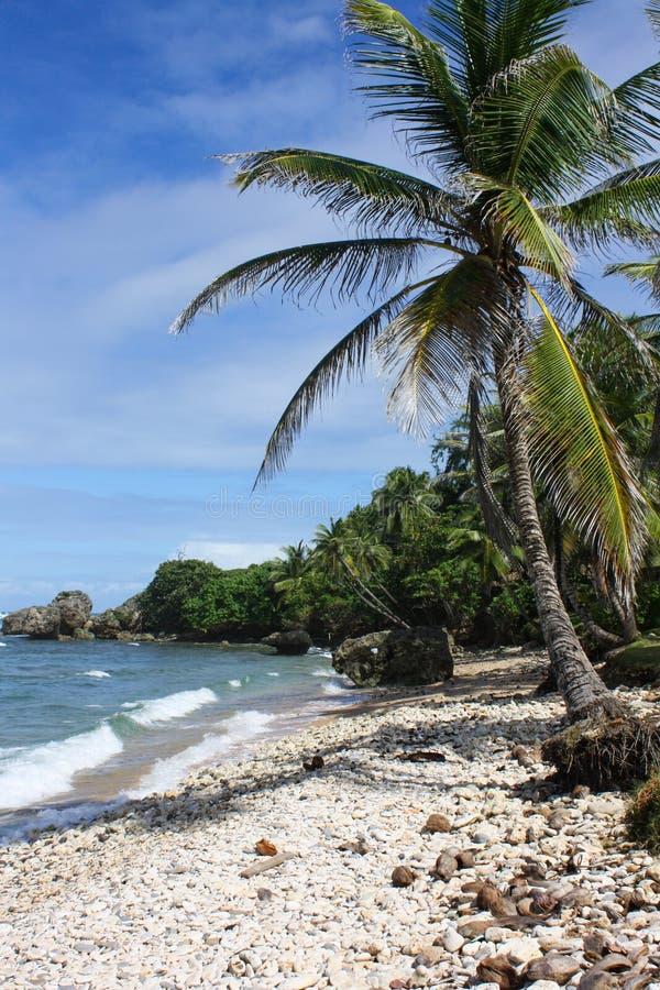 Palma verticalmente esposta sulla spiaggia di sabbia bianca fotografia stock