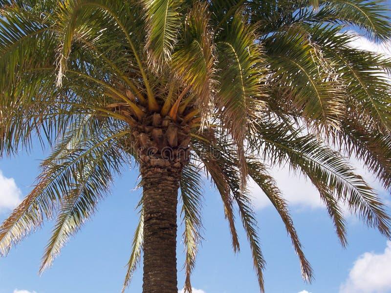 Palma w Francja zdjęcia stock