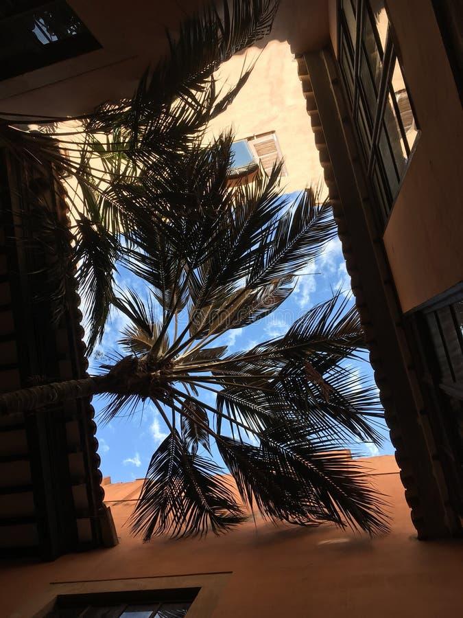Palma w mieście obrazy stock