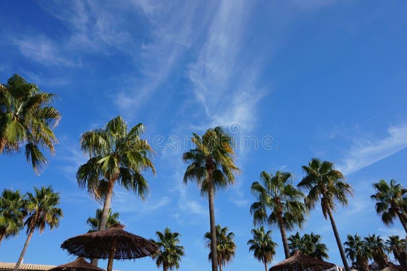 Palma w niebie obrazy royalty free