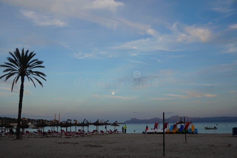 Palma w niebie zdjęcie stock