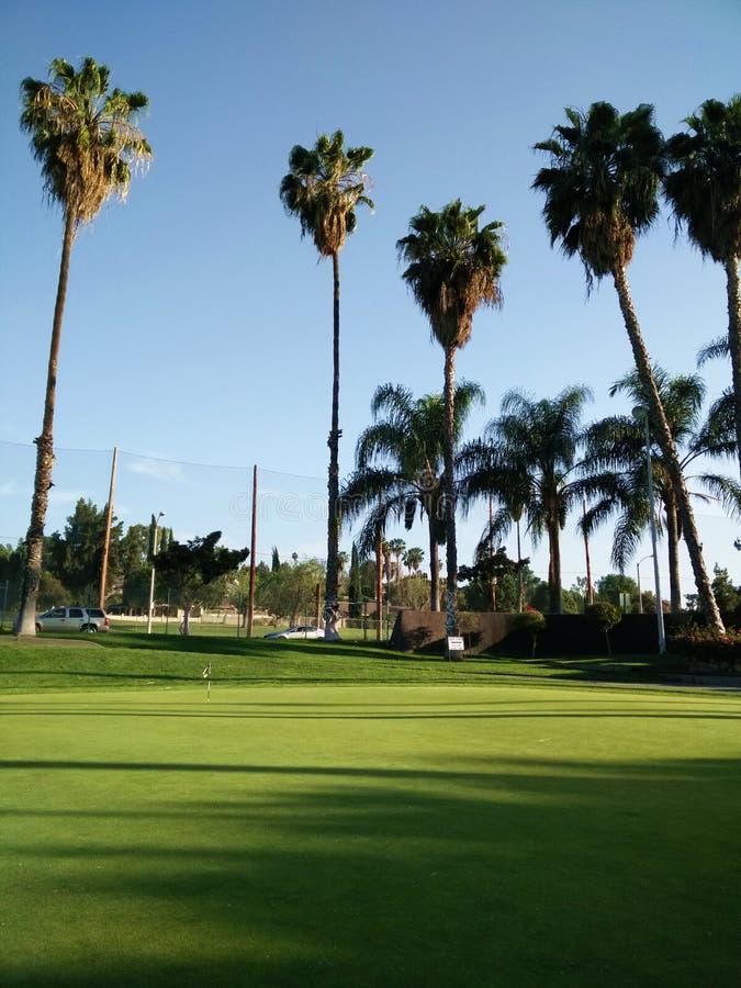 Palma w polu golfowym obraz stock