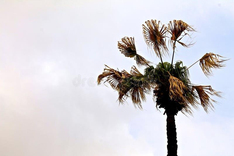 Palma wiatr na zmierzchu zdjęcia royalty free