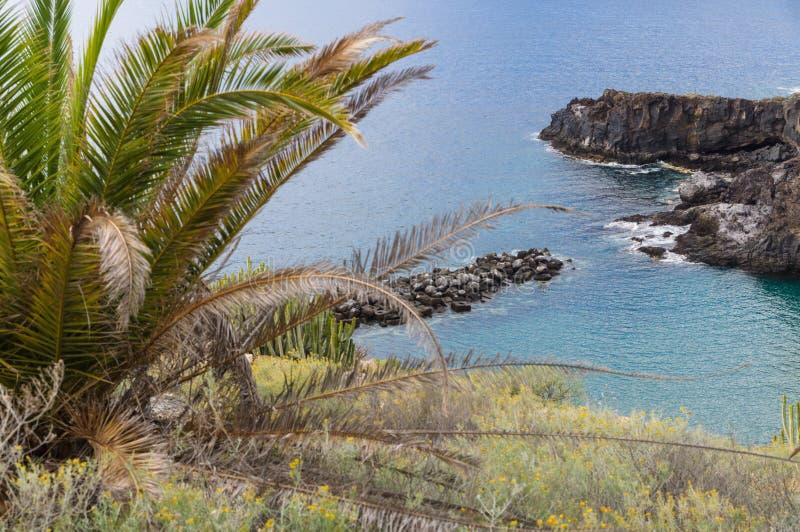 Palma y costa de mar rocosa fotografía de archivo
