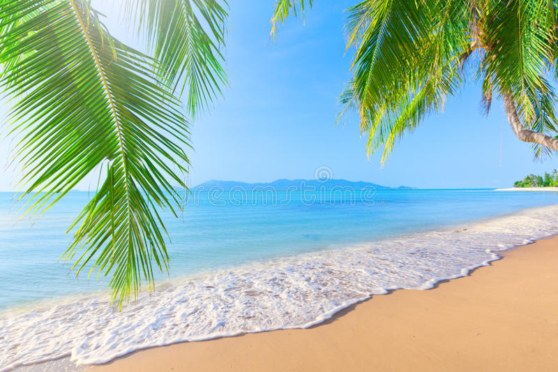 Palma y playa tropical fotos de archivo libres de regalías