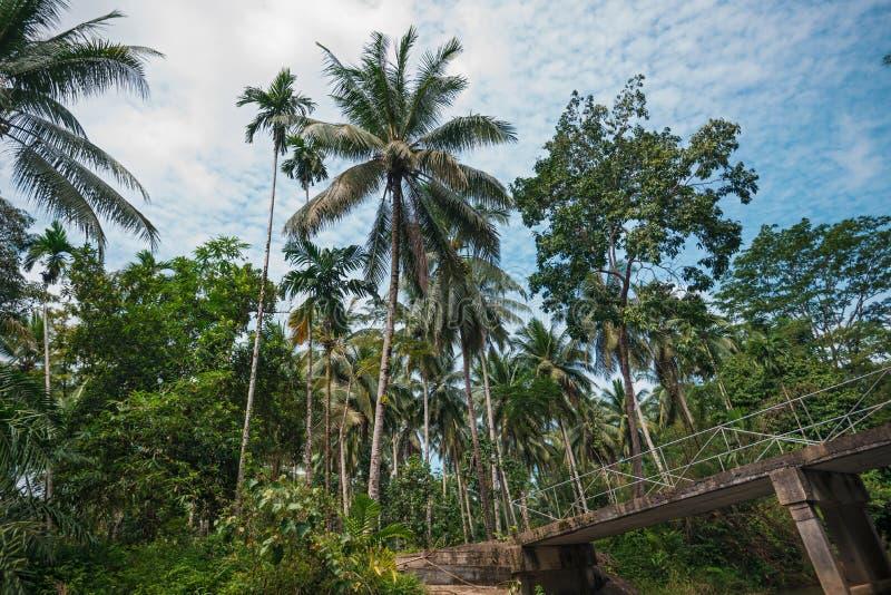 Palma y puente fotos de archivo