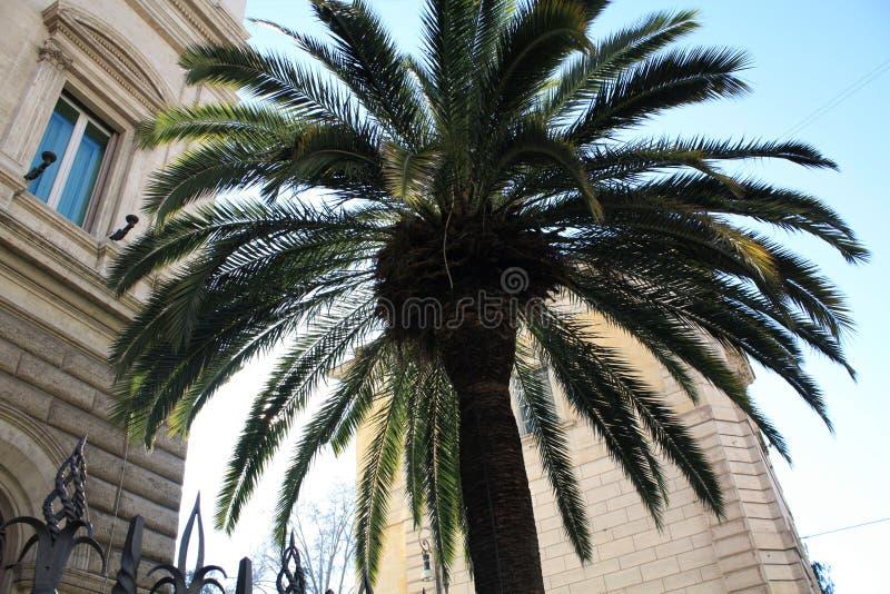 Palma z budynkiem Włochy rom słoneczny dzień obrazy stock