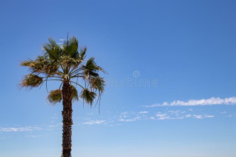 Palmachtergrond over blauwe hemel Beeld met nadruk op een aardige palm tegen vage bewolkte blauwe hemel Ruimte voor Reis stock fotografie