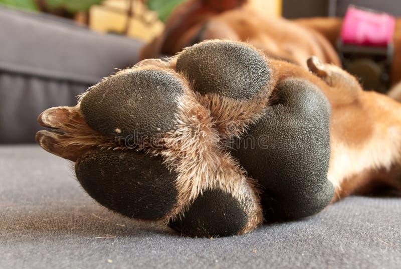 Palmadita del perro imagenes de archivo