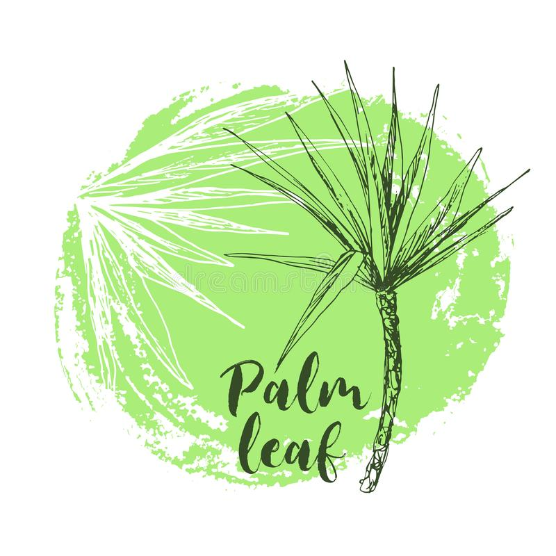 Palmae della regina o del cocco con il manifesto delle foglie illustrazione di stock