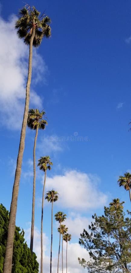 Palmas altas contra el cielo azul en la ciudad de la playa de California meridional fotografía de archivo libre de regalías
