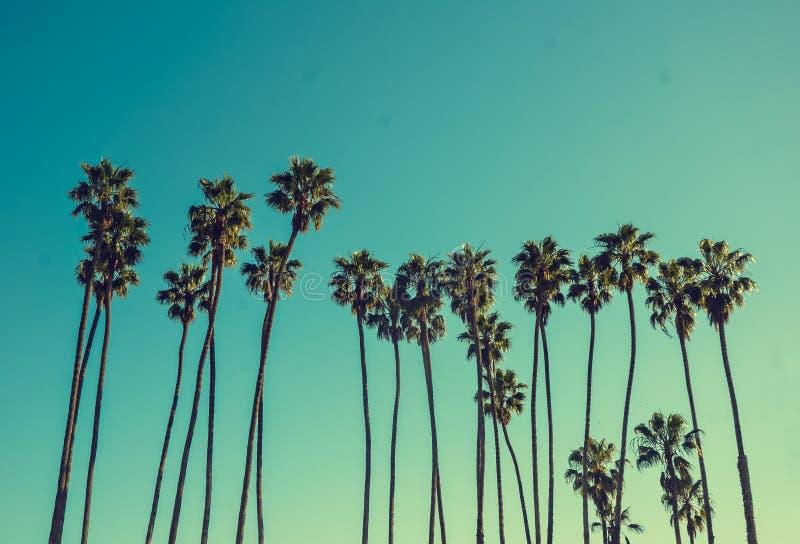 Palmas altas de Califórnia no fundo do céu azul fotografia de stock
