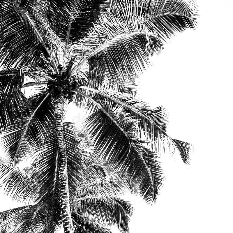 Palmas altas em uma praia tropical ilustração do vetor