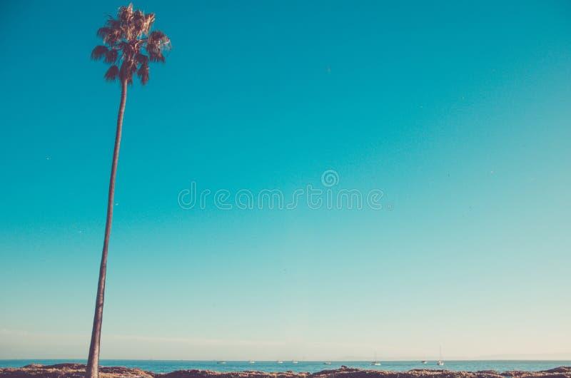 Palmas altas na praia, fundo de Califórnia do céu azul imagens de stock
