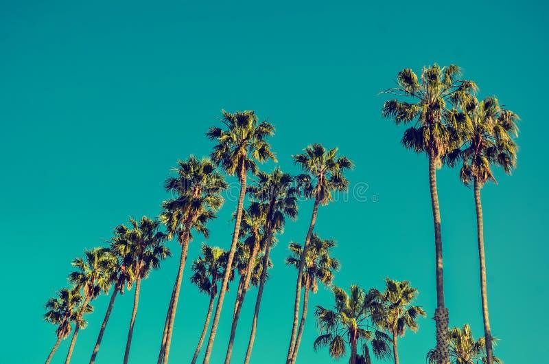 Palmas altas na praia, fundo de Califórnia do céu azul fotografia de stock