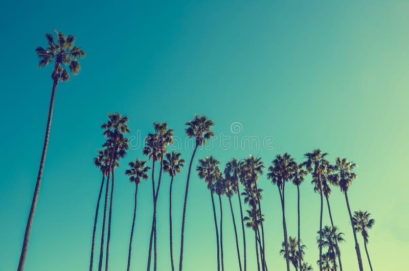 Palmas altas na praia, fundo de Califórnia do céu azul imagens de stock royalty free