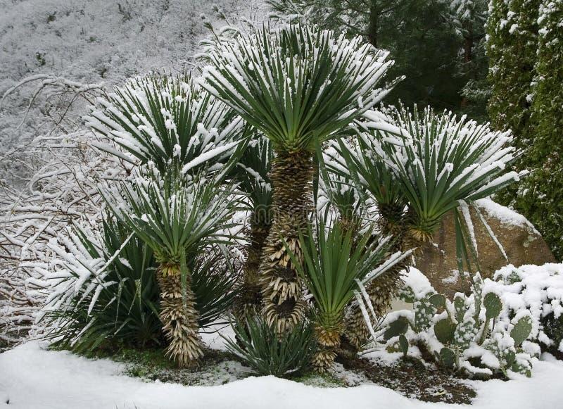Palmas bajo nieve fotografía de archivo