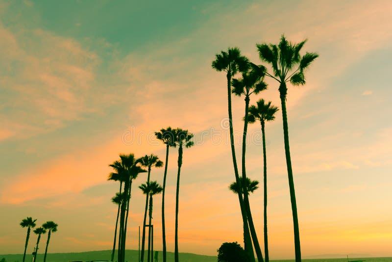 Palmas coloridas do céu e da silhueta das noites californianas retros na SU imagens de stock