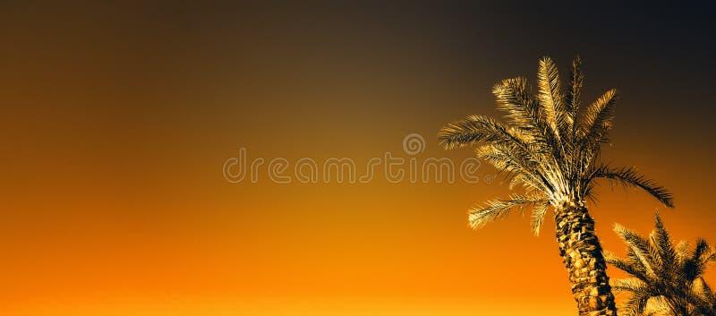 Palmas com efeito alaranjado do pop art Foto estilizado do vintage com escapes claros Palmeiras do verão sobre o céu na praia fer imagens de stock