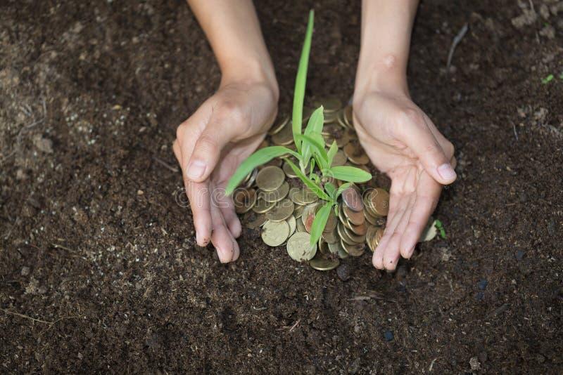 Palmas com uma árvore que cresce da pilha das moedas, mãos que guardam um tr imagem de stock