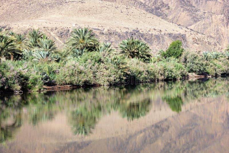 Palmas datileras y arbustos con reflexiones en el río de Draa. imágenes de archivo libres de regalías