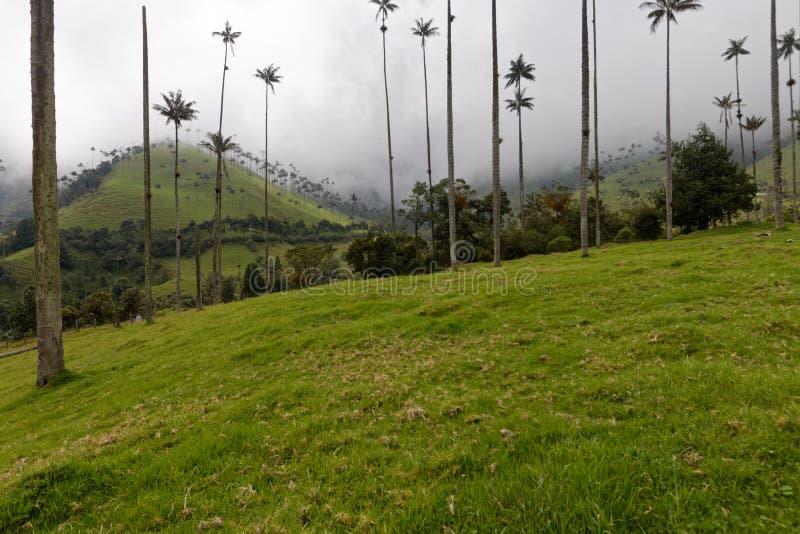 Palmas de cera en el valle de Cocora en Colombia 1 imagen de archivo libre de regalías