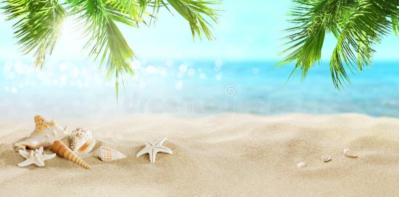 Palmas de coco em uma praia tropical imagens de stock