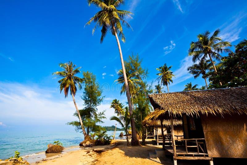 Palmas de coco en costa tropical imagenes de archivo